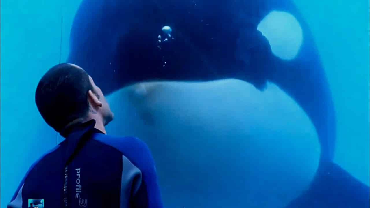 separation anxiety and issues of the mother orca kasatka in seaworld The outcry over the treatment of seaworld's orca has now  including his favorite whales takara and her mother kasatka,  treating separation anxiety in dogs.